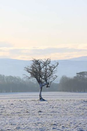 Taken in the snow in Phoenix Park a few years ago - i call it the dancing tree Bare Tree Beauty In Nature Cold Temperature Dancing Day Dublin, Ireland Frozen Nature Outdoors Sky Snow Tree