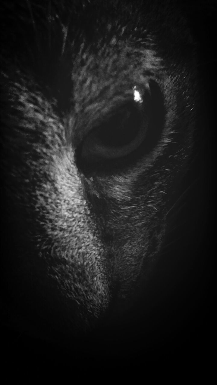 one animal, pets, domestic animals, animal themes, mammal, animal head, dog, domestic cat, no people, looking at camera, portrait, indoors, close-up, feline, night