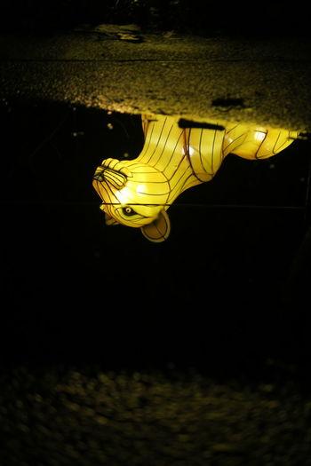 Gepard lamp reflection in water Reflection UnderSea Sea Life Water Swimming Underwater Aquarium Reptile Sea Horse
