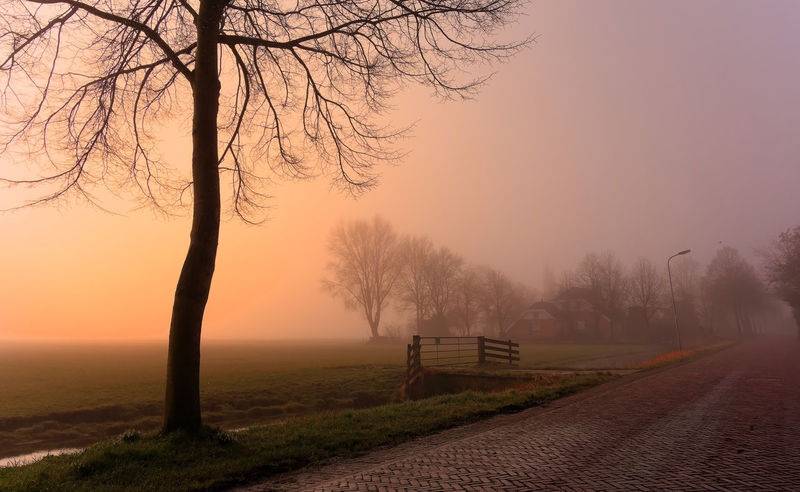 Misty morning Bare Tree Beauty In Nature Branch Environment Fog Hazy  Idyllic Land Landscape Nature No People Non-urban Scene Outdoors Plant Road Scenics - Nature Sky Sunset Tranquil Scene Tranquility Tree