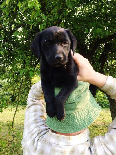 Pet Portraits Human, what are you doing? Dog Black Labrador Puppy Portrait Friendship