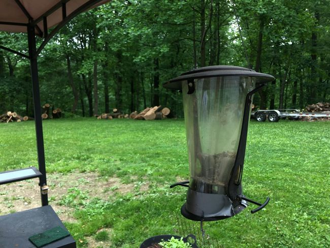 Bird Feeder Plant Tree Grass Green Color Growth Nature Day No People Tranquility