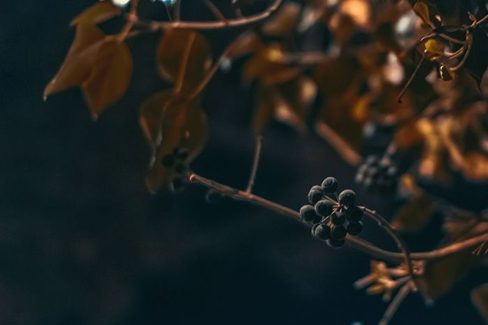 Experimental photo of nature. I don't know what the berries I have shoot but it's looks awesome Berries Night Nature Leaf Tree Spring Springtime Experimental Topdown Photography First Eyeem Photo