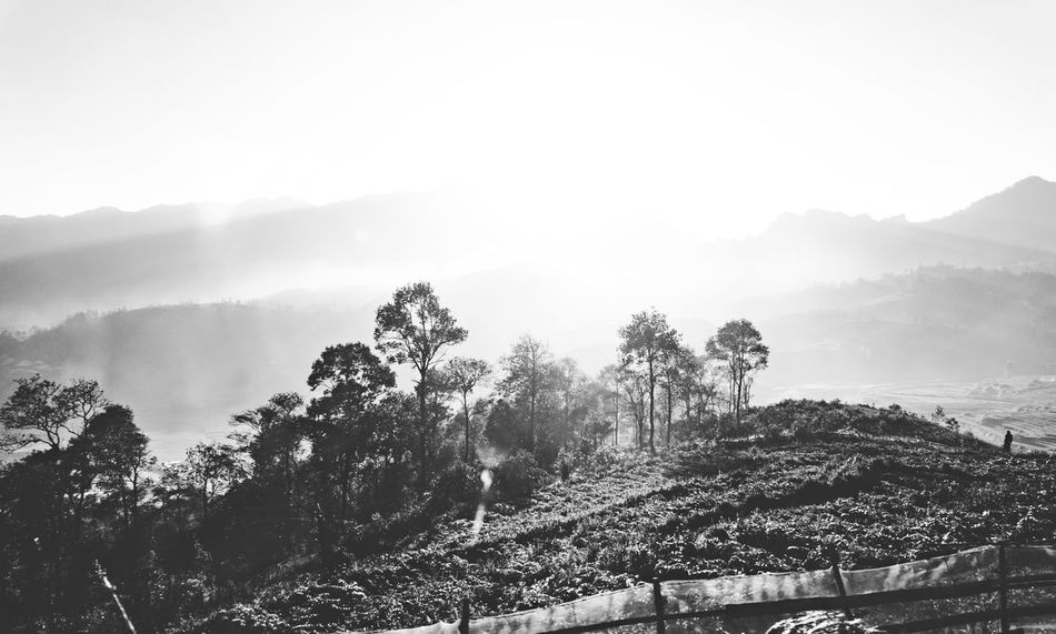 Morning in mountain L Mo Mou SA Sunshire T Trees Viet Nam