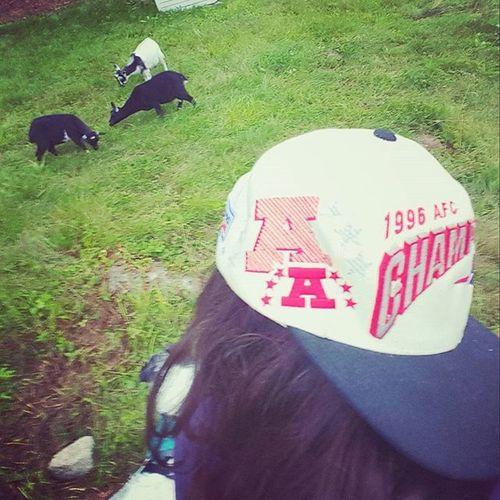 Farm girls need snaps too! Vintagesnapback Proline Sportsspecialties PATRIOTSNATION Goats Farm