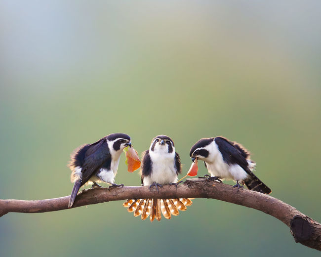 Birds perching on a branch