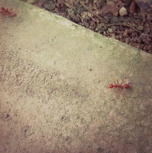 Ant Asusprime AsusTransformerPrime