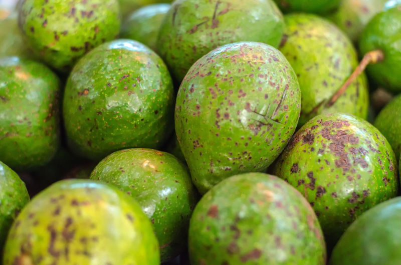Exotic tropical fruit, green Avocado display for sell in market Backgrounds Close-up Day Food Food And Drink Freshness Fruit Green Color Healthy Eating Large Group Of Objects Mango Mango Fruit No People Outdoors