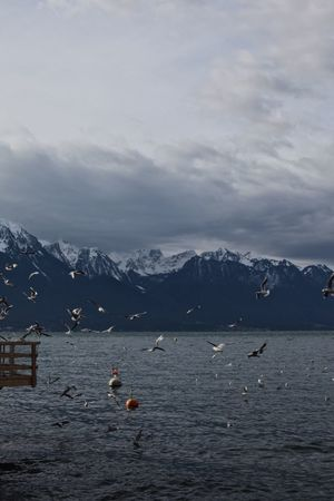 Switzerland Montreux Lake Flying Bird Mountain Beauty In Nature Nature Sky Cloud - Sky Tranquility Water Scenics Mountain Range Outdoors Tranquil Scene Waterfront Bird Winter Cold Temperature Animals In The Wild Animal Themes Shades Of Winter