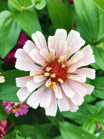 EyeEm Best Shots Flower Freshness Fragility Flower Head Close-up Beauty In Nature Pink Color Springtime Nature Single Flower