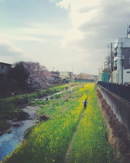 Nogawa Yellow