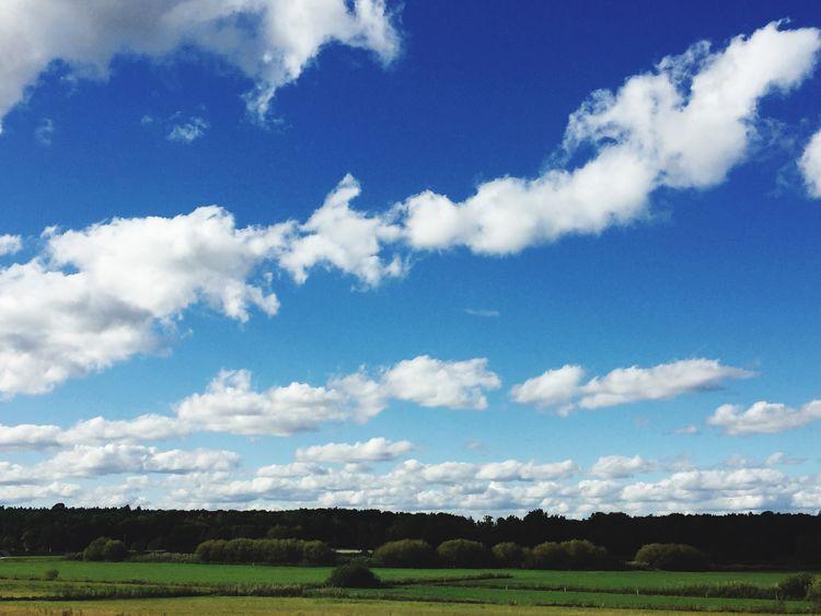 Sky Cloud - Sky Nature Field Tranquility Landscape Blue Tranquil Scene Scenics No People Beauty In Nature Outdoors Day Rural Scene Grass Agriculture Landschaft Himmel Wolken Wolkenhimmel Frühling Sommerfeeling Sonnenschein  Schöner Ausblick Mammal