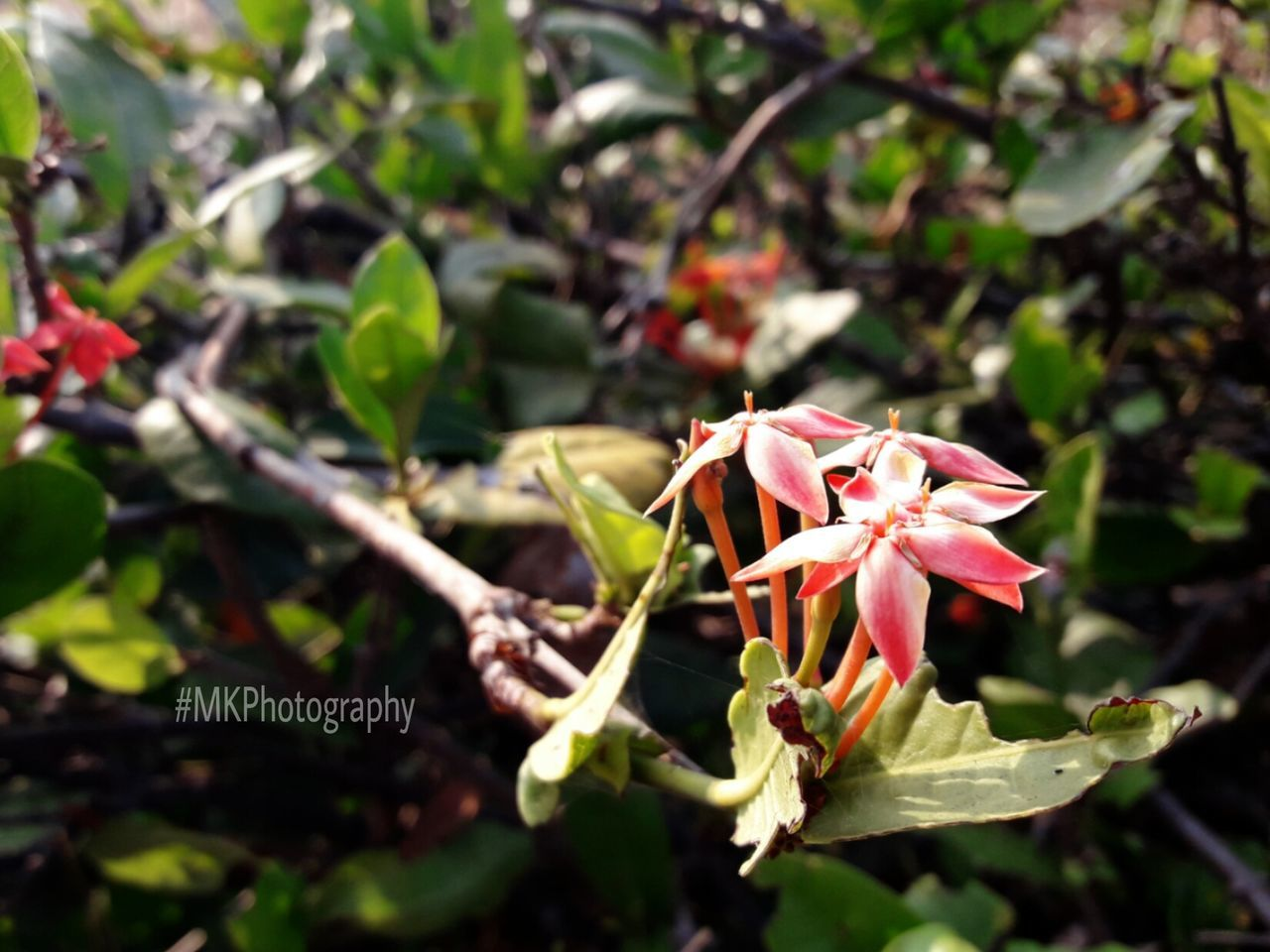 growth, nature, flower, fragility, petal, beauty in nature, plant, outdoors, day, freshness, no people, flower head, leaf, close-up, blooming