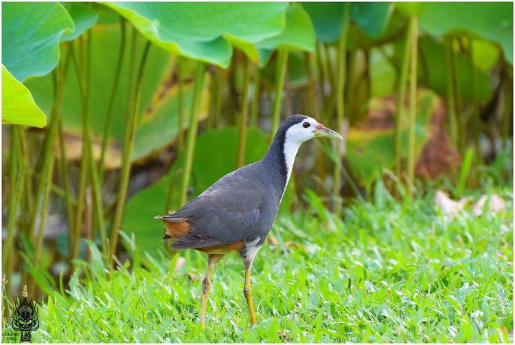 It Likes to Loiter Around the Water Bird Photography Bird Walk Birdwatching Bird Bird Walking Bird Watching Birds Birds_collection