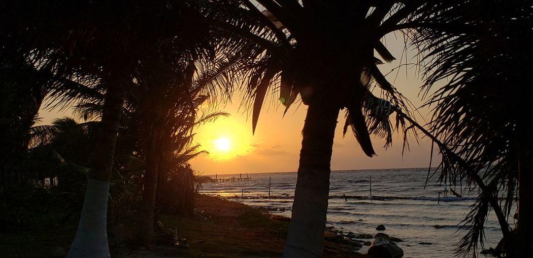 The Traveler - 2019 EyeEm Awards Tree Water Sea Sunset Beach Tree Area Palm Tree Silhouette Sun Sunlight
