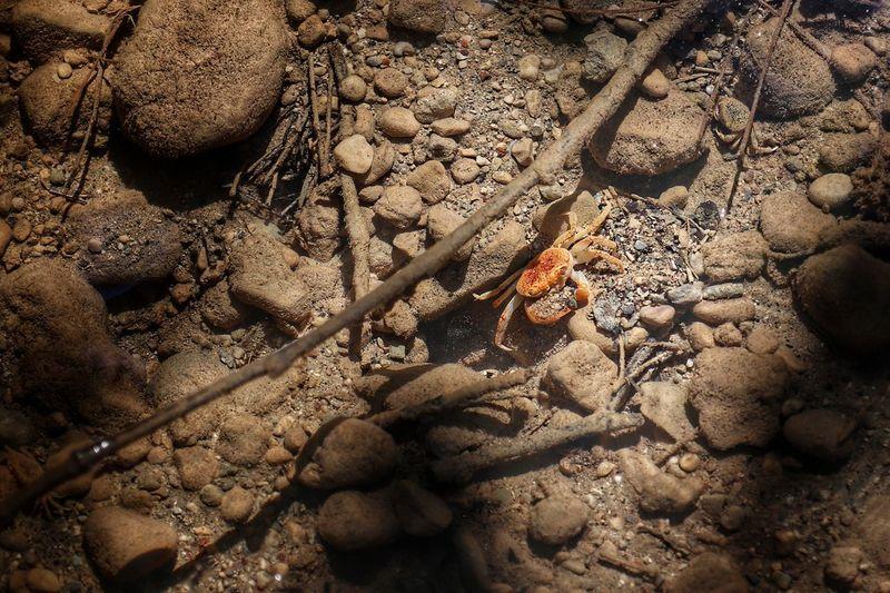 Crab in Cristal