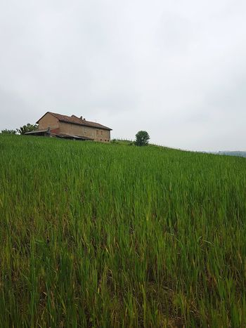 Agriculture Field House Growth Rural Scene Outdoors Nature Landscape No People Cereal Plant Sky Grass Day Architecture Rural Building Freshness Beauty In Nature Piedmont Italy Langhe Green Color Crop