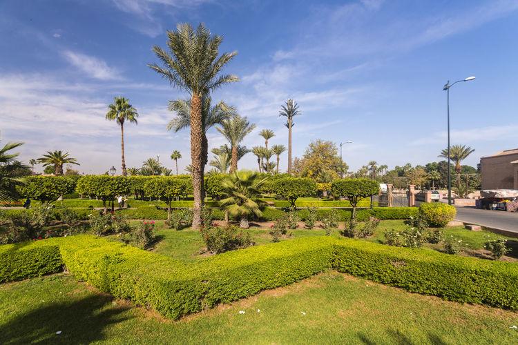 Palm trees in garden against sky