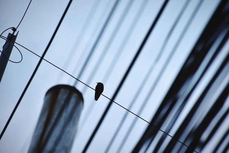 Low angle view of bird on cable