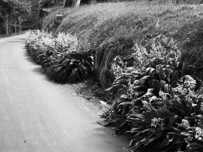 Black And White Bushes Plant Road Black And White Path Scenics Black And White Friday