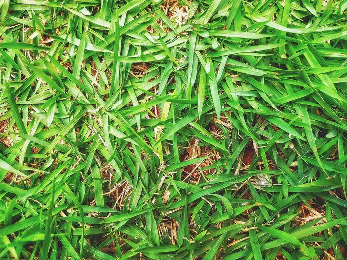 Full frame shot of fresh green leaves on land