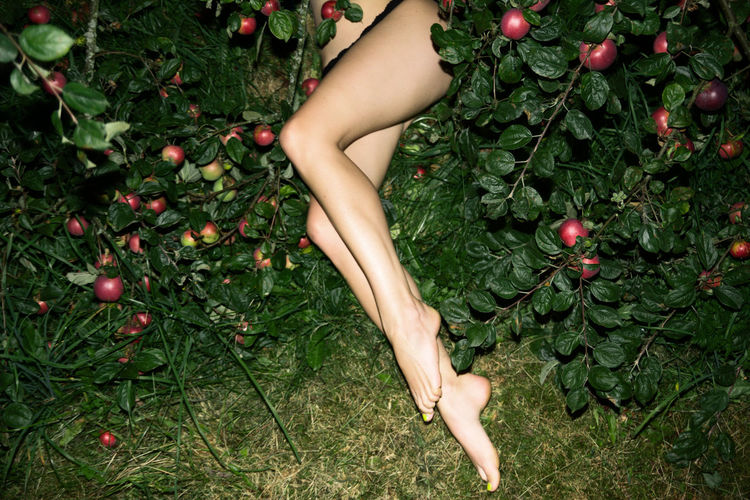 Low section of woman with fruits on plants
