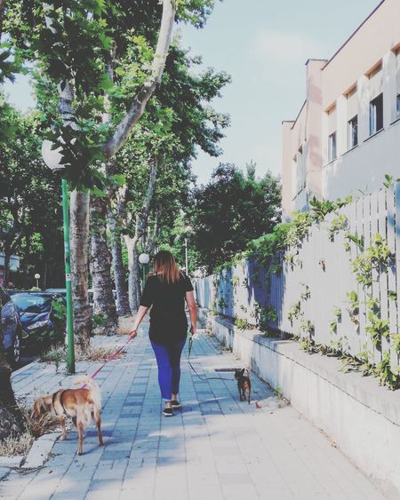 Two dogs Dog Pets One Woman Only People One Person Tree Domestic Animals Women City Stefanopagliucaphotography Pescara Abruzzo Cityphotography Urban Photography Urban Escape Urban Life