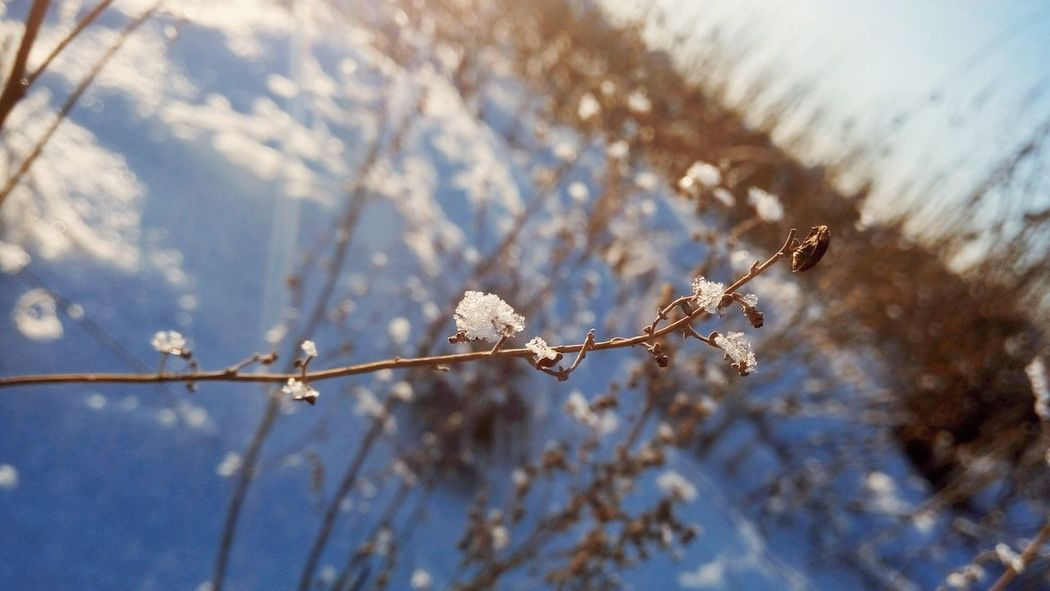 Nature Beauty In Nature No People Winter Frozen Close-up Snow Outdoors Cold Temperature Day Plant White Color Winter Branch Clear Sky Creativity Season  Sky