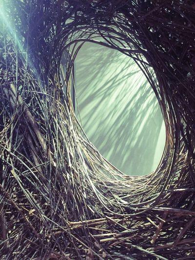Urban Spring Fever Renwick Gallery Contemporary Art Nest Wonder Washington, D. C.