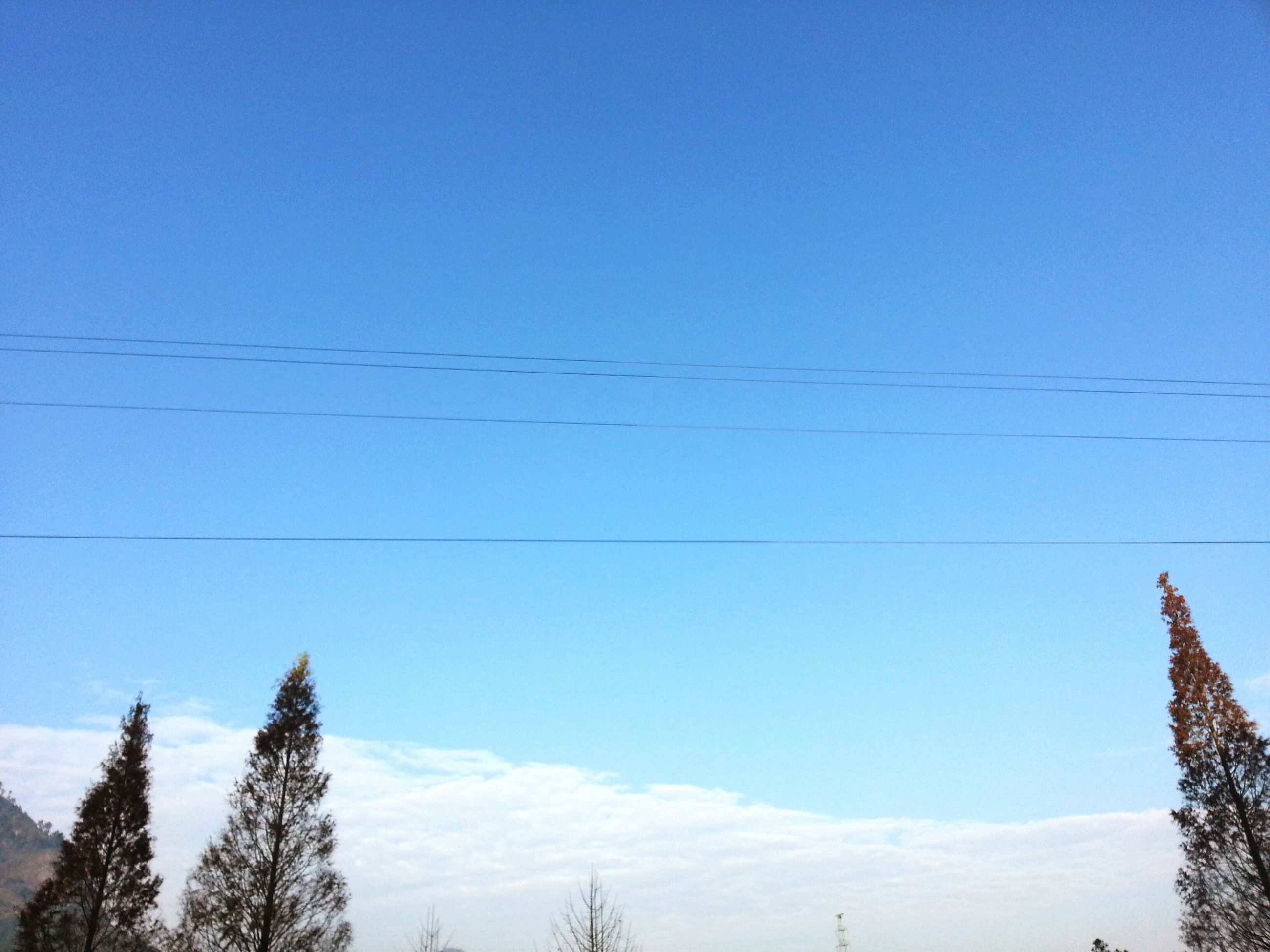 low angle view, blue, clear sky, power line, tree, copy space, cable, sky, vapor trail, nature, high section, day, outdoors, beauty in nature, no people, tranquility, electricity pylon, electricity, power supply, branch