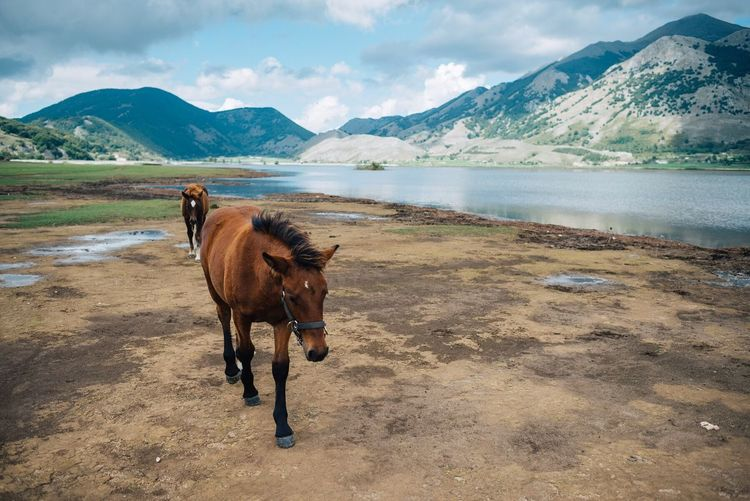 Horses Walking At Riverbank By Mountains Against Sky