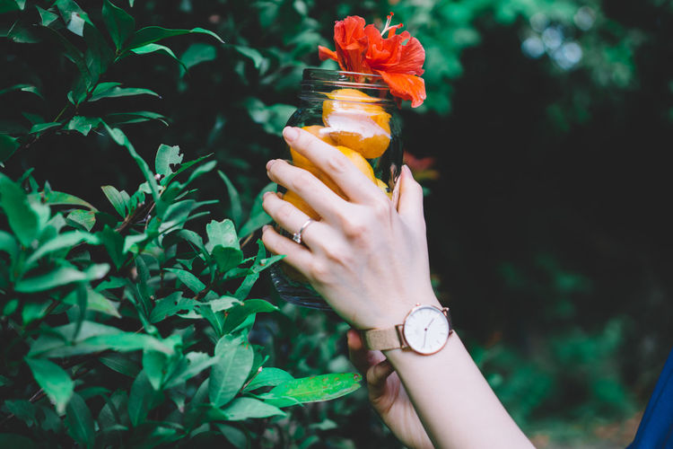 Cropped Image Of Woman Holding Plums With Red Flower In Glass Jar By Plant