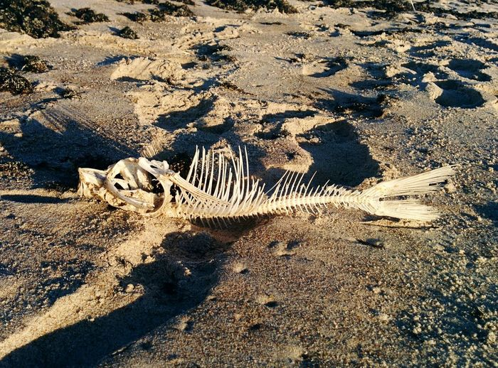 Fish Fish Bones Sand Beachlife Nature Shadow Beauty In Nature Sunlight Beach