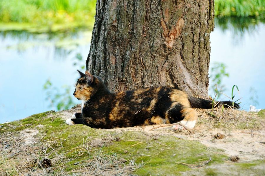 One Animal Animal Themes Animal Wildlife Animals In The Wild Mammal Day Outdoors No People Nature Lake Water Tree Grass Beauty In Nature
