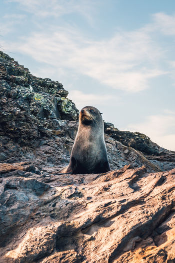 What is this Seal looking at? Cloud Cloudy Coastline Nature Nature On Your Doorstep Nature Photography Rock Rocky Cloud - Sky Clouds Clouds And Sky Coast Nature_collection Nature_perfection Naturelovers Naturephotography Photo Photographer Photography Photooftheday Sky