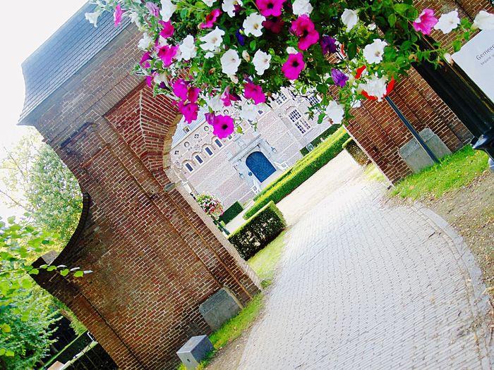 Flowers Castle Gateway Picture Rose - Flower White Flower
