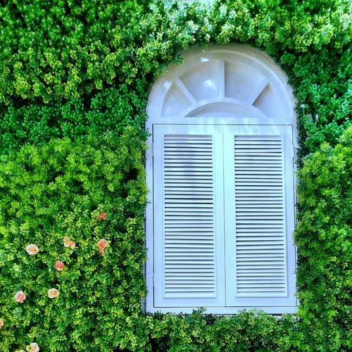 Closed Plant Green Color Flower Streetphotography Taking Photos Hi! Hello World Windows Window Window View