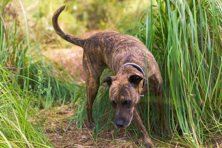 Day Outdoors Nature Dogslife Pet Portraits Dog Dogs Animal Animal Themes One Animal Mammal Animal Wildlife Plant Grass No People Animals In The Wild Portrait Vertebrate Looking At Camera Domestic Animals Herbivorous Canine Pets