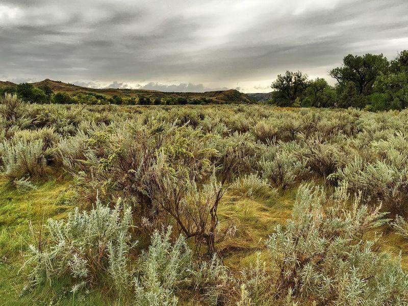 Sagebrush & Rain Nature Sky Cloud - Sky Outdoors Landscape North Dakota North Dakota Badlands Theodore Roosevelt National Park
