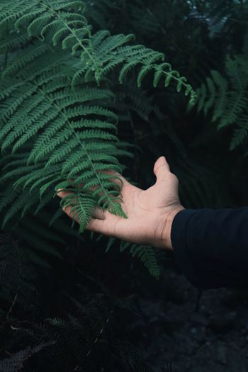 Close-up of person hand on plant