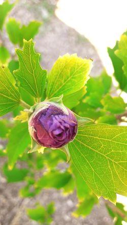bonita flor