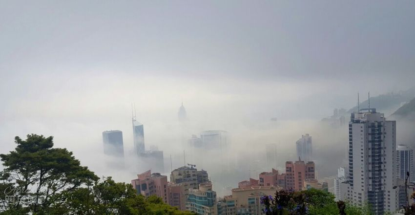 City in fog Tree Urban Skyline Modern Skyscraper Downtown District Business Finance And Industry Social Issues First Eyeem Photo