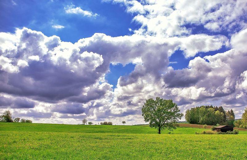 Nature Cloud -