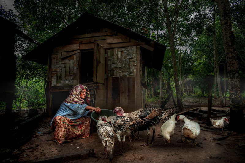 Woman feeding birds while sitting at farm