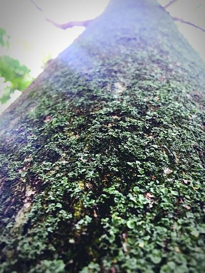 Beautiful Nature, so close to the tree Beauty In Nature Beautiful Beautiful Nature Taking Photos Different Perspective Prespective Tree Trunk Trunk Detail Pine Tree So Beautiful  Taking Photos Nature Photography Under The Tree Big Tree Diferent View