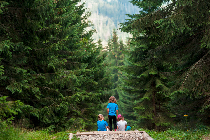 Rear view of children sitting in forest