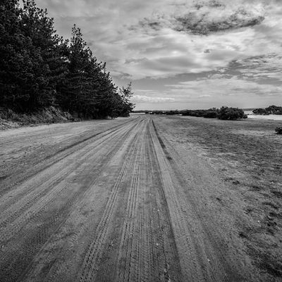 Tracks at Waionui Inlet tucked away at the south head of the Kaipara Harbour. Mangroves, mudflats and sand dunes makes for odd scenery. Newzealand Landscape Aoteoroa Photography nature bnw blackandwhite tracks