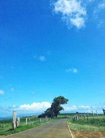 Where the Dinosaur tree crosses the road Blue Landscape The Way Forward Road Tree Field Day Tranquil Scene Shaped Tree