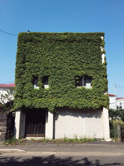 Architecture Streetphotography Green Japan Sapporo Building Old House