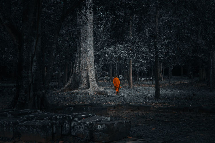 Rear view of person standing by trees in forest